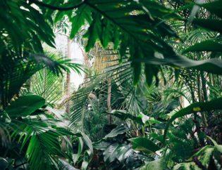 serre tropicale la tête dans les arbres