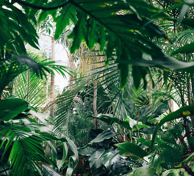 forêt tropicale la tête dans les arbres