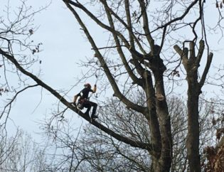 demontage d'un arbre la tete dans les arbres